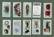 Cigarette cards set Common Objects of the Sea-Shore 1924